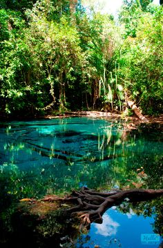 ✧ pinterest: lx_xa ✧ Blue Pool, Krabi, Thailand