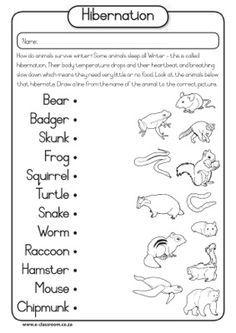 hibernation worksheet | Winter--animals, clothing, hibernation ...