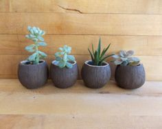 Handmade Mini Coconut Succulent Cactus Planter - Bud Vase - Shot Glass Sake Cup - Tropical Decor - Island Style Living - Coconut Collection