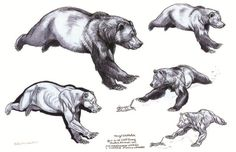 -Terryl Whitlatch One of the major divisions of Creature Design is that of depicting real animals, as opposed to imaginary ones. In fact . Bear Drawing, Anatomy Drawing, Animal Sketches, Animal Drawings, Ours Grizzly, Terryl Whitlatch, Urso Bear, Running Bear, Brother Bear