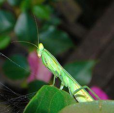 """Γρήγορο, εύκολο και """"πράσινο"""" εντομοκτόνο για κάθε μαμούνι που επιτίθεται στα λουλούδια σας! Bugs, Insects, Homemade, Plants, Animals, Organizing, Cleaning, Decor, Animales"""