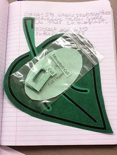 Biology Just-in-Time: Leaf foldable manipulative for the interactive notebook. - wish it had links to the activities, but pictures are clear enough to see details