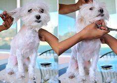 do it yourself dog grooming #dog_grooming_training #how_to_groom_a_dog #do_it_yourself_dog_grooming