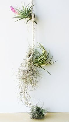 rope + air plants combo