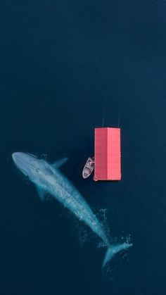 Whale Aerial Wallpaper for iPhone and Android L Wallpaper, Mobile Wallpaper, Aerial Photography, Art Photography, Night Photography, Landscape Photography, Birds Eye View, Aerial View, Scenery
