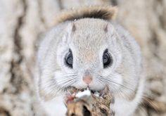 animal, cute, and squirrel Bild