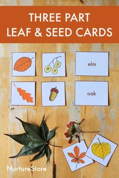 Eight ways to use these free printable three part leaf cards for forest school activities - NurtureStore