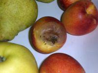 Comment se débarrasser des mouches à fruits ?