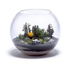 cactus terrarium in a fish bowl! Terrarium Bowls, Terrarium Scene, Cactus Terrarium, Garden Terrarium, Cacti And Succulents, Cactus Plants, Succulent Ideas, Cactus Decor, Cactus Art