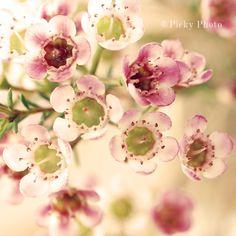 pinkflowers 005.jpg