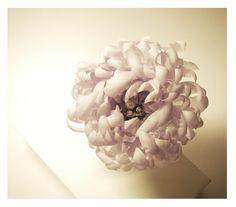 chrysanthème | Flickr - Photo Sharing!