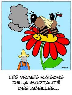 pauvres abeilles qui disparaissent lentement..