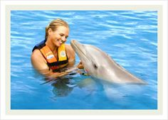 swimming with the dolphins...