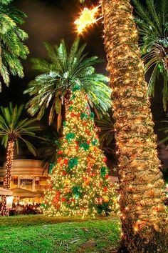 christmas palm tree in south beach miami florida - Palm Tree Decorated For Christmas