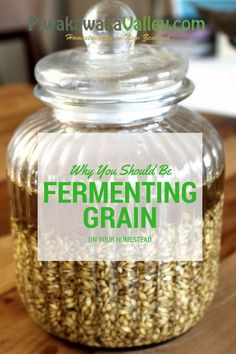 Fermenting grains for chickens and goats save you money and is healthier for the animals