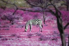"""""""Once Upon a Time"""" in Kenya  (by Ben Heine)"""