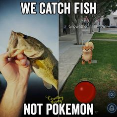 We catch fish not pokemon. Exactly