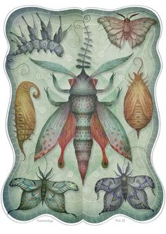 Original Illustrations by Vladimir Stankovic
