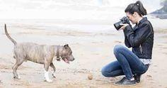 Photography Jobs Online - 8 Tactics for Marketing Your Pet Photography Business Pet Photography Tips, Photography Backdrops, Photography Business, Animal Photography, Photography Marketing, Photography Lessons, Wildlife Photography, Portrait Photography, Pet Photographer