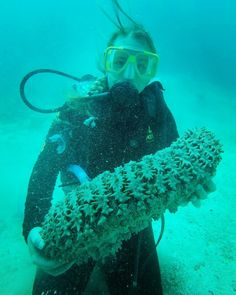 Me and a lovely sea cucumber. How i like these animals while they are doing nothing to impress us!  #australia #diving #scubadiving #sea #cucumber #greatbarrierreef #queensland #cairns #openwaterdiver #dive #explore #travel #the #world #under #the #surface #photograph #photooftheday #gopro #australiagram #follow4follow #like4like #tagsforlikes #instagood #divingislife #happy #pure #nature @australia by chantitraveler http://ift.tt/1UokkV2