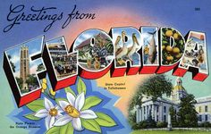 From our collection of vintage large letter, linen postcards from the and Greetings from Florida. The Greetings from Florida postcard has been carefully scanned and retouched to look beautiful at even the largest print sizes. Old Florida, Vintage Florida, State Of Florida, Florida Travel, Travel Usa, Tallahassee Florida, Visit Florida, Florida Living, Florida Vacation