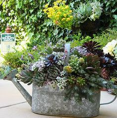 Succulent Care Guidelines