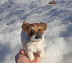 Handmade Custom Pet Portrait / Needle Felted Dog by GourmetFelted