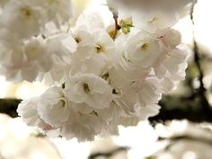 petal flurry | Alicia Paulson