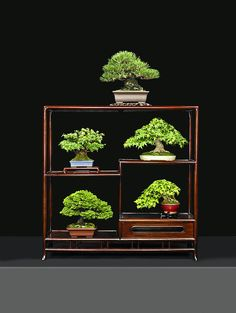 Suthin's favorite Bonsai Trees.