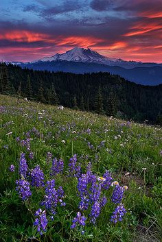 ✯ Beautiful Sunset over Mount Rainier--I miss the pink & purple shows every morning and evening!✯ Beautiful Sunset over Mount Rainier--I miss the pink & purple shows every morning and evening! Beautiful Sunset, Beautiful World, Beautiful Places, Beautiful Beautiful, Places To See, The Places Youll Go, Skier, All Nature, Le Far West