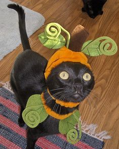 Halloween has now passed and all over the world cat owners are uploading their photos of their cats dressed as pumpkins. Funny Cat Videos, Funny Cats, Best Cat Gifs, Pet Costumes, Black Cat Costumes, Costume Ideas, Cat Dresses, Halloween Disfraces, Halloween Cat