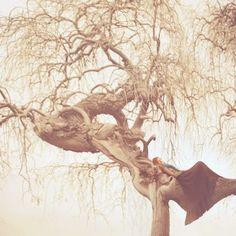 夢の中のような不思議な空気感。細かな枝までが再現され一枚の絵のような作品。