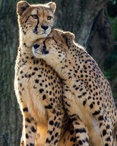 : Doesnt matter what animals we are together and in love to protect and serve . - : Doesnt matter what animals we are together and in love to protect and serve – Tiere – - Nature Animals, Animals And Pets, Baby Animals, Funny Animals, Cute Animals, Wild Animals, Big Cats, Cats And Kittens, Cute Cats