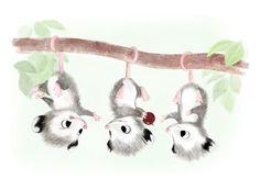 Baby Possums!