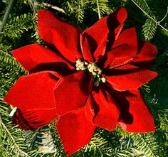 Ribbon Craft: How To Make a Beautiful Faux Poinsettia