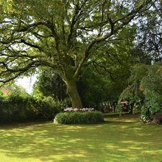 Roble en Jardín de los Helechos. Donas-Gondomar. Galicia. #Jardín #garden #árboles #plantas #plants Golf Courses, Ferns, Donuts, Oak Tree, Plants