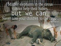 #Madri #figli #elefanti #animali #circo
