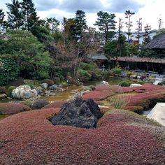 #妙心寺退蔵院 #京都 #taizoin #japanesegarden