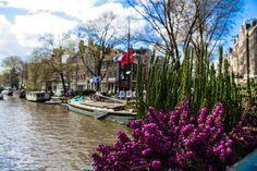 Flowers on the canals by GianlucaEpirotti #ErnstStrasser #Niederlande #Netherlands Netherlands, Flowers, The Nederlands, The Netherlands, Florals, Holland, Flower, Bloemen
