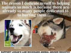The before and after picture of animal abuse. Unbelievable that this isn't the worst picture on animal cruelty.