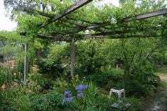 Find Out What Are The Best Vines for a Pergola Ensemble Today !