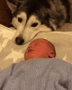 Husky loves her new baby brother#dogs #kitty #lovecats #kittens #animals #ねこ #animal #kitten #cat #pets #ilovemycat #love #catoftheday #happynewyear #adorable #catlover #pet #meow #猫 #cute #pinterest