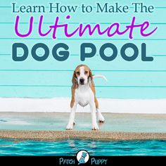 Dog DIY- Learn How to Make The Ultimate Dog Pool and have some summer fun with your dog. Diy Dog Treats, Homemade Dog Treats, Dog Ate Chocolate, Trimming Dog Nails, Dog Pond, Diy Dog Toys, Dog Feeding, Happy Dogs, Dog Care