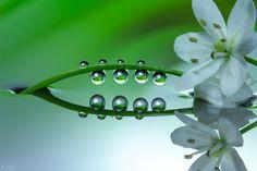 Perlas de agua