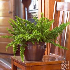 Ferns add lushness, greenery, and life to indoor decor. And many attractive ferns are also easy keepers; they don't require strong light or constant care. Here's a rundown of how to care for ferns and some of the easiest ferns you can grow. Indoor Ferns, Best Indoor Plants, Boston Ferns Care, Best Smelling Flowers, Rabbit Foot Fern, Ferns Garden, Garden Fun, Patio Trees, Fern Plant