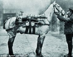 Heroes: Churchill was incensed at the treatment of tens of thousands of Britain's war horses in 1919