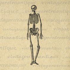 Printable human skeleton diagram graphic download image medical printable digital skeleton download medical anatomy image human skeleton graphic antique clip art jpg png eps print 300dpi no2225 ccuart Choice Image