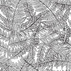 View top-quality illustrations of Botanical Flowers Seamless Fern Pattern. Find premium, high-resolution illustrative art at Getty Images. Fabric Design, Pattern Design, Botanical Line Drawing, Logo Sign, Sewing Art, Botanical Flowers, Free Illustrations, Free Vector Art, Textile Patterns