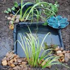 Creating a pond doesn't need to be complicated. here's an easy way to make small ponds that will attract wildlife. Small Water Gardens, Container Water Gardens, Eco Garden, Garden Pond, Mini Pond, Pond Animals, Ponds Backyard, Outdoor Ponds, Diy Water Feature