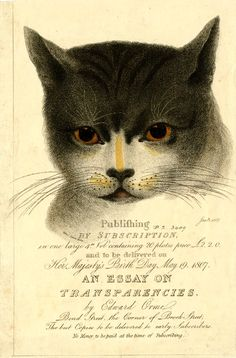 Advertisement for subscriptions for 'An Essay on Transparencies' by Edward Orme, with a cat's head, its eyes varnished so that they glow when held to the light. June 1807